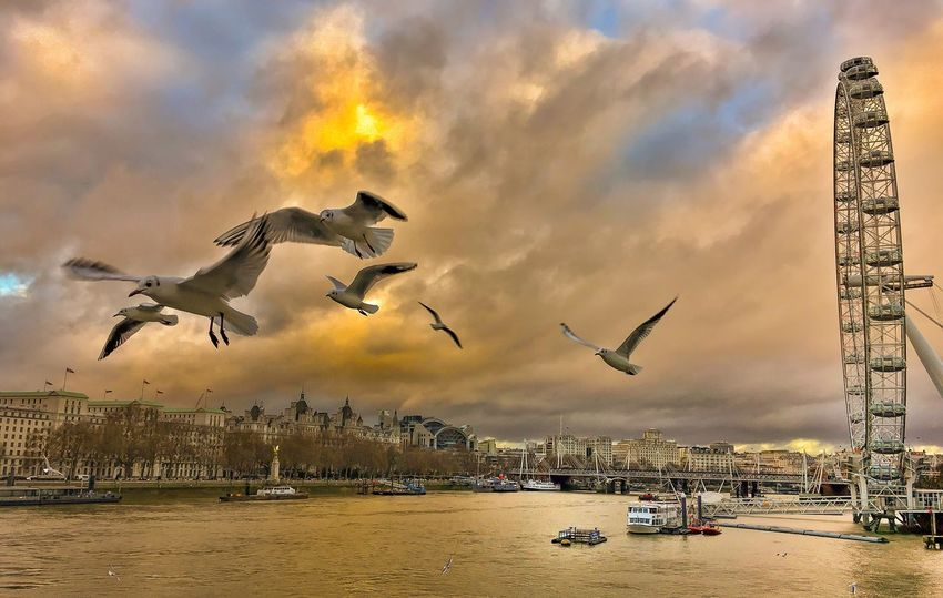... Peace for 2017 ... ❤____________________________________ Flying Bird Animals In The Wild Animal Themes Sky City Mid-air Spread Wings Built Structure Cloud - Sky Animal Wildlife Building Exterior Outdoors Water No People Nature Motion Architecture Day Migrating Sun_collection, Sky_collection, Cloudporn, Skyporn EyeEm Best Shots London AnotherDay Another Year