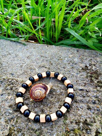 Grass Outdoors High Angle View Day No People Close-up Nature Beauty In Nature Snail Snail🐌 Snail Collection Snail Photography Snailshell Salyangoz Bileklik Bilekliklerim First Eyeem Photo FirstEyeEmPic First Eyem Photo