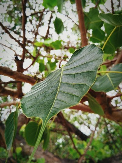 Live For The Story Nature Green Color Close-up Outdoors Growth Beauty In Nature Plant Tree No People