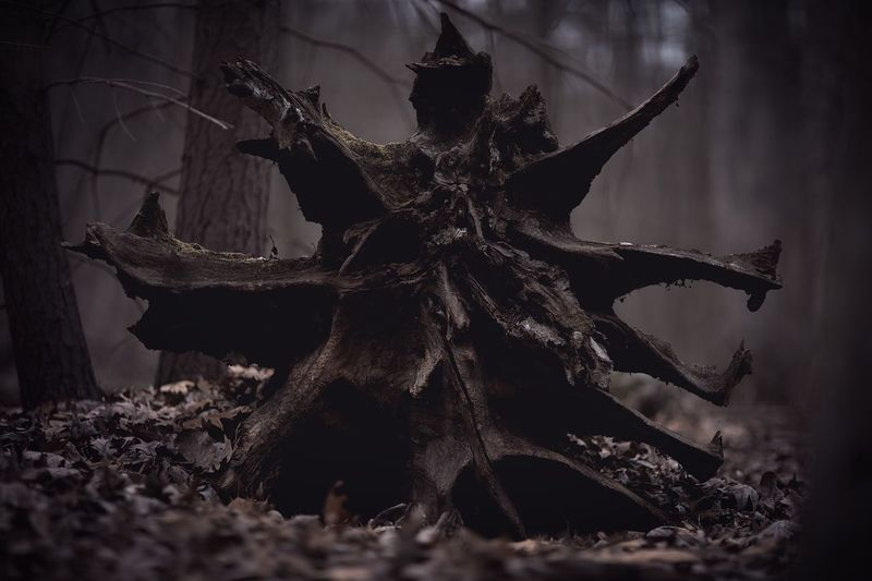 Close-up of dead tree