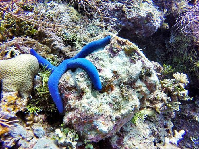 A lazy Starfish  | edisi leyeh-leyeh. Takabonerate Takaboneratedive Wonderfulindonesia Indonesiacantik Visitsulawesi Underwater