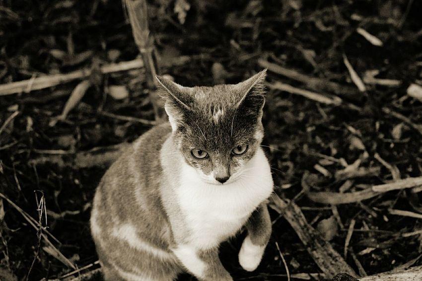 EyeEm Selects Animal Domestic Cat