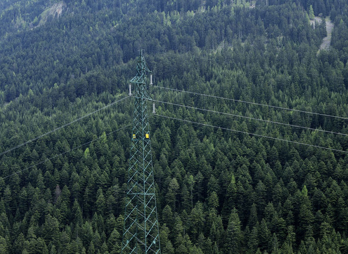 Aerial view of electricity pylon against pine trees growing in forest