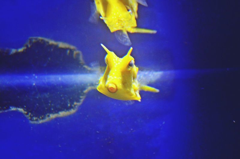Yellow Fish At The Aquarium Take Over Contrast TakeoverContrast Pet Portraits Paint The Town Yellow Perspectives On Nature
