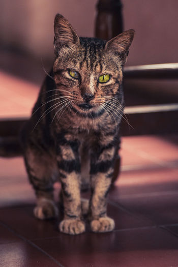 Cat Mood Mood Captures Animal Animal Photography Eye Cute Pets Cats Of EyeEm Cute Kucing Hewan INDONESIA EyeEmNewHere Domestic Cat One Animal Pets Domestic Animals Feline Animal Themes Looking At Camera Indoors  Portrait Sitting Mammal Whisker No People Close-up Yellow Eyes Leopard Day