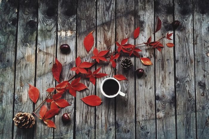 ShareTheMeal Autumn herfstdagen. Red Hanging Close-up No People Wood - Material Food Tizianacambaraufotografie.com EyeEm Best Shots Leaf Vegetable Foodphotography Vegetable Organic Wood EyeEmNewHere Food Stories The Creative - 2018 EyeEm Awards