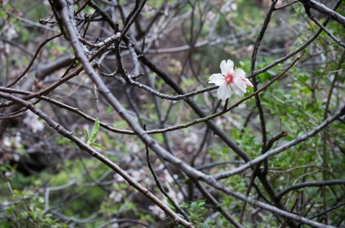 Taken while hiking up the Masca Valley. There were lots of these delicate little flowers. Bloom In Dark Canary Islands Cool Tones Delicate Flower Flowers Fragile Island Landscape Masca Masca Vally Natural Nature SPAIN Spring Tangle Tenerife Tree Trees Volcanic Landscape White