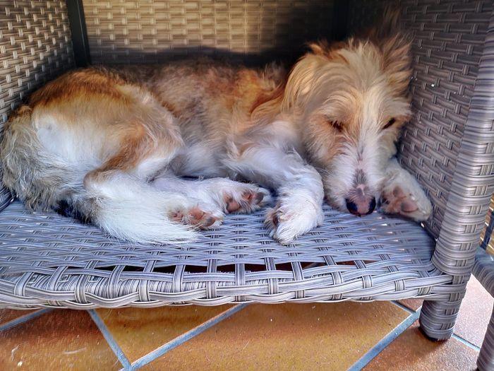 Dog sleeping in basket