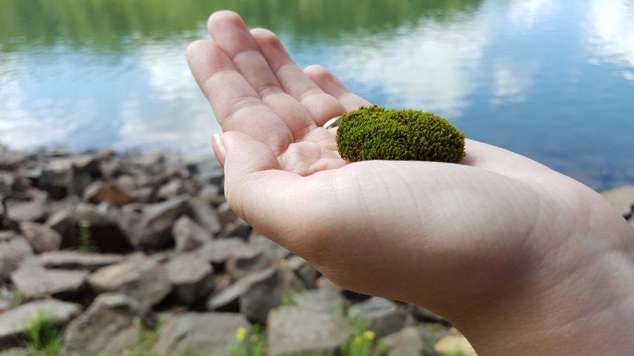 Moss Peace