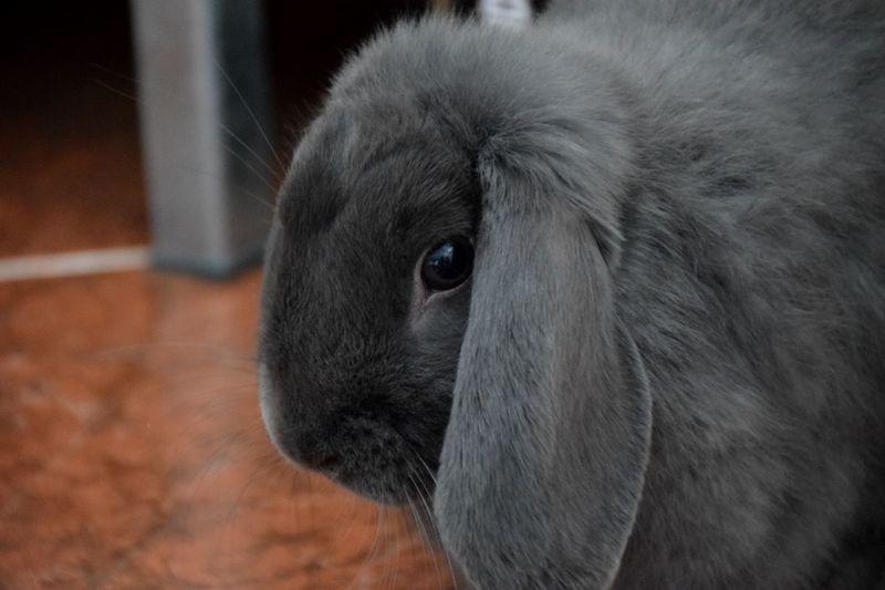 Bunny 🐰 Flaffy Domestic Animals Pets One Animal Cute Cutness