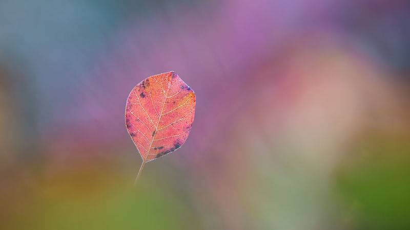 carso multicolor Autumn Beauty In Nature Change Close-up Day Focus On Foreground Fragility Leaf Maple Nature No People Outdoors Tranquility