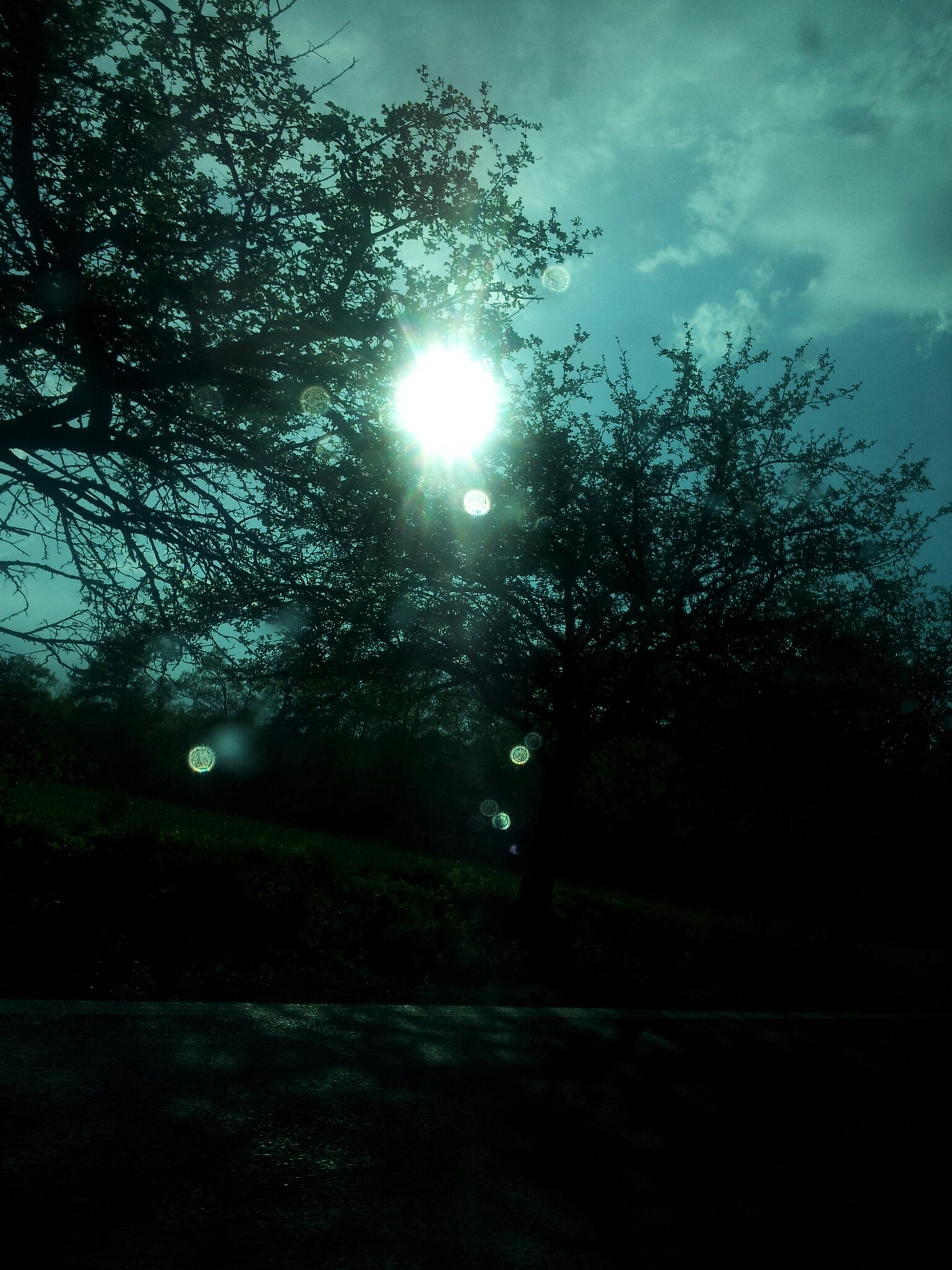 sun, tree, lens flare, sky, sunbeam, sunlight, silhouette, tranquility, nature, growth, beauty in nature, tranquil scene, bright, no people, branch, outdoors, cloud - sky, sunny, back lit, scenics