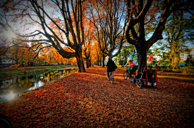 Autumn Bicycle Chestnut Tree Fallen Leaves Outdoors Park Rautenstrauchkanalköln Tree Tree Trunk