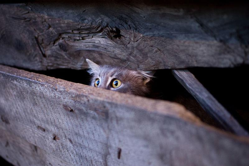 Portrait of cat hiding behind