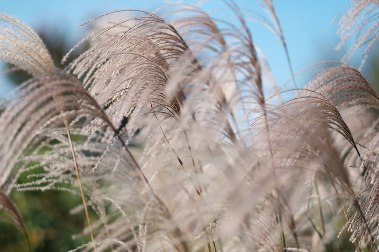 Close-up of plant against blurred background