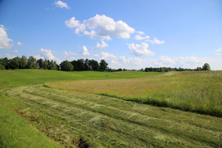 Latvija Latvia Madona Gulbitis Growth Rural Scene Summer Views Summer Meadow Mowing The Grass Harvest Time Harvesting The Land