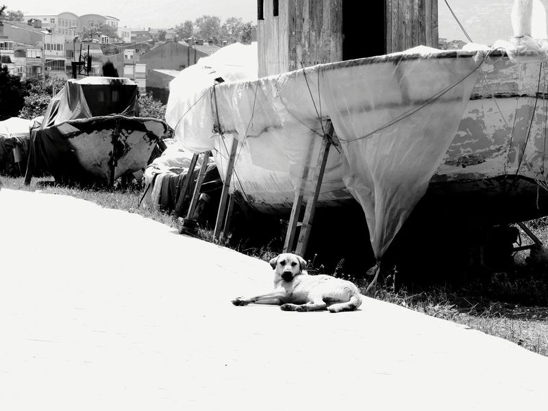 Day Built Structure City Nautical Vessel Docks Docklands Boat Ruined Walkways  Dog Relax Alone But Not Lonely Along The Way Vintage Vintage Boat Sommergefühle