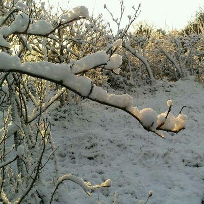 Snow #amlp