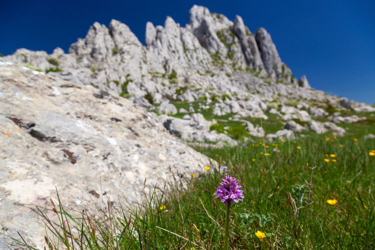 Purple flowering plants on rocks against sky
