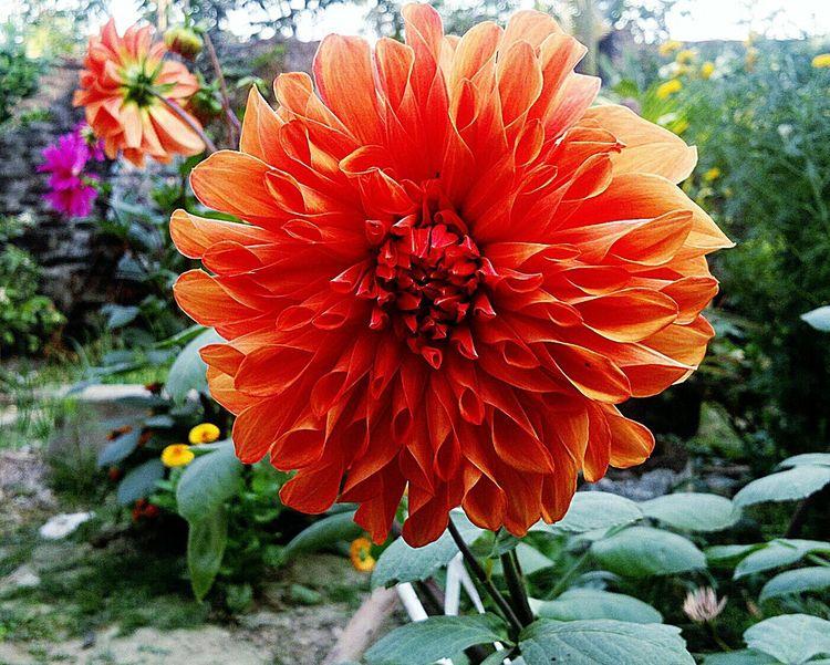 Taking Photos Eyeem Nature Lover. Open Edit. Taking Photos. Beautiful Flowers.