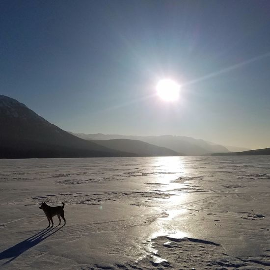 it is -30 and he keeps trying to lead us back to the lodge! Littledog Chihuahuamix Schipperkechihuahua Sun Landscape Outdoors Silhouette Scenics Sunlight Cold Temperature Lake Nature Day
