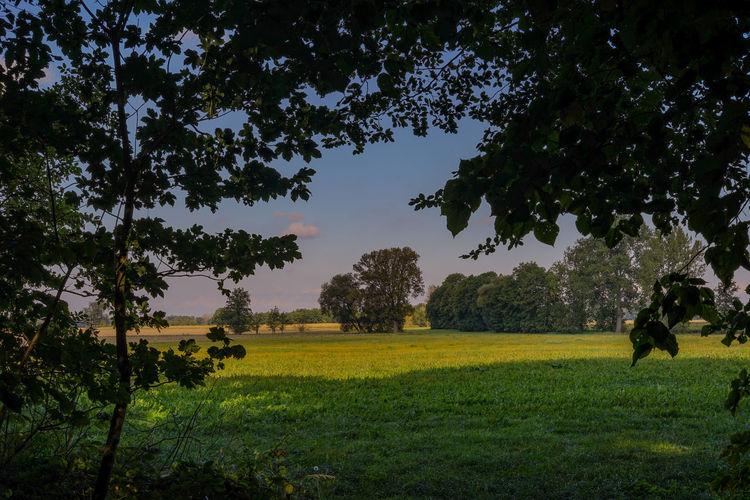 Quellendorf Sachsen-Anhalt Südliches Anhalt Landscape Landscape Photography Germany Deutschland Tree Beauty In Nature Nature Green Color Field No People Outdoors Sky