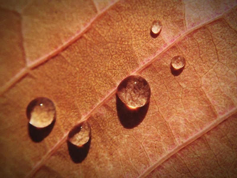 Tropfen auf Herbstblatt