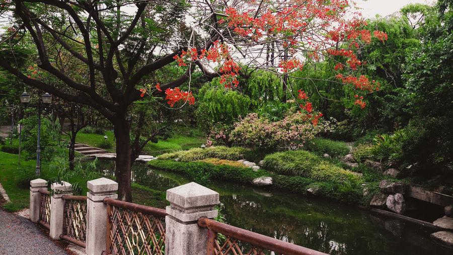 Tree Flower Red