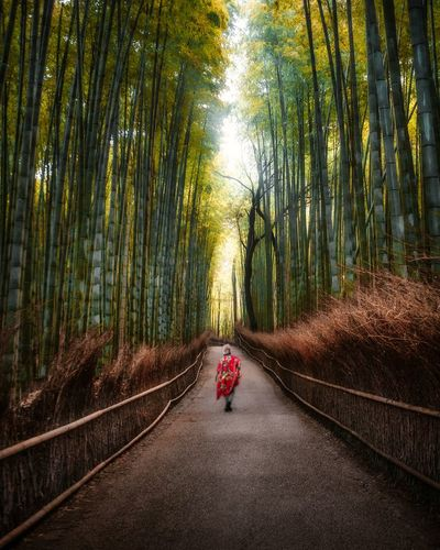 Bamboo grove Japan Japan Photography Exploring Travel Traveling Travel Photography Nature Nature_collection Japanese Culture Bamboo Tree Forest Road Child Full Length Bamboo - Plant Tree Area Bamboo Grove Nature Reserve Sky Empty Road Single Lane Road Winding Road Hiker Treelined Lush Foliage Mountain Road Greenery Lush - Description Tree Canopy  Springtime Decadence