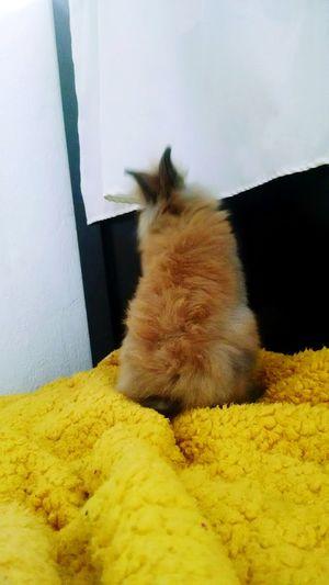 Rabitt One Animal Rabbit ❤️ Sand No People Day Rabbits 🐇