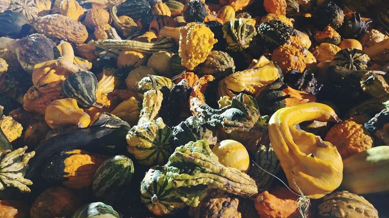 Gourds Vegetable Color Photography Pumpkin Patch Nightshot Low Angle View Multi Colored Outdoors No People