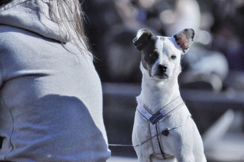 EyeEm Selects Dog Pets Domestic Animals Mammal Animal Themes One Animal White Color Focus On Foreground Day Sitting Outdoors Portrait Close-up No People Nature Streetphotography Walking Around Central Park - NYC