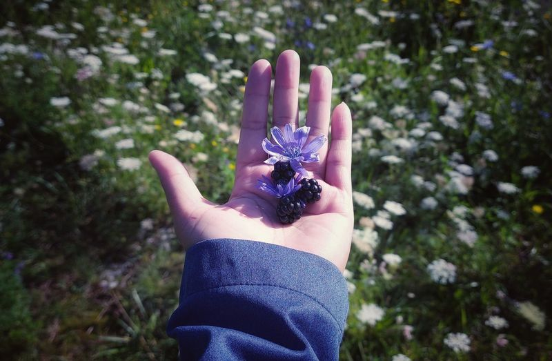 Human hand holding plant against blurred background