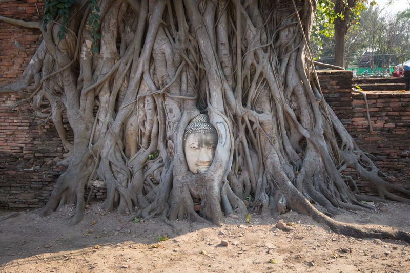 Bethesda Sanctuary  Giant Trees Buddha Buddhist Temple Buddha Image History Historical Building History Place Thailand Thailandtravel Thailand Photos Thai Temple Thai Style Old Ruin Ruined The Past Castle History Historic Building Ancient Rome Historic Ancient