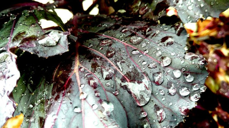 Friday The 13th Close-up Leaf Rain Purplewetwetpurple Transparent Shapeandtexture Macro Photography Freshness Eye4photography  EyeEmBestEdits