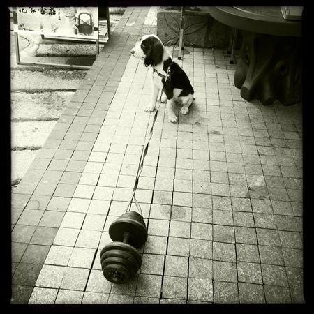 Blackandwhite China Photos Day Dog Foshan Guangdong