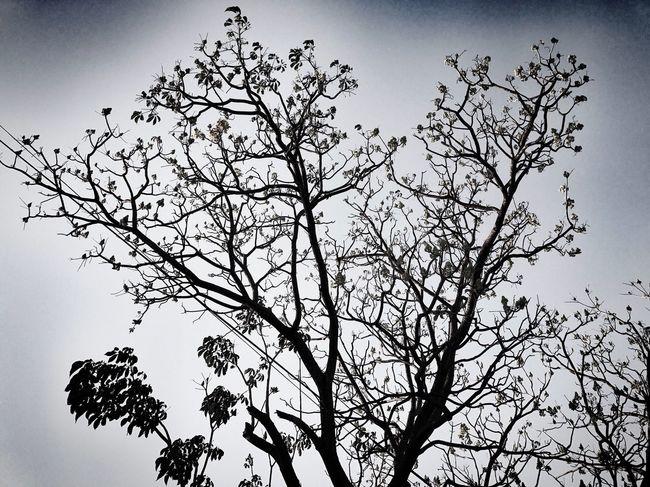 Natura en monochromo Streetphotography IPhoneography Blackandwhite Monochrome Nature Photography Tree