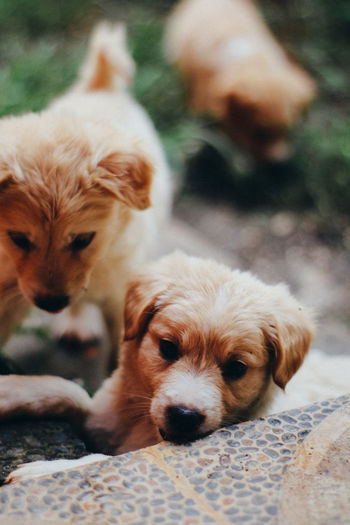 Domestic Pets Canine Mammal Dog Animal Themes Domestic Animals Animal Group Of Animals Vertebrate Two Animals Young Animal Puppy Focus On Foreground No People Relaxation Close-up Day Selective Focus Small Animal Family