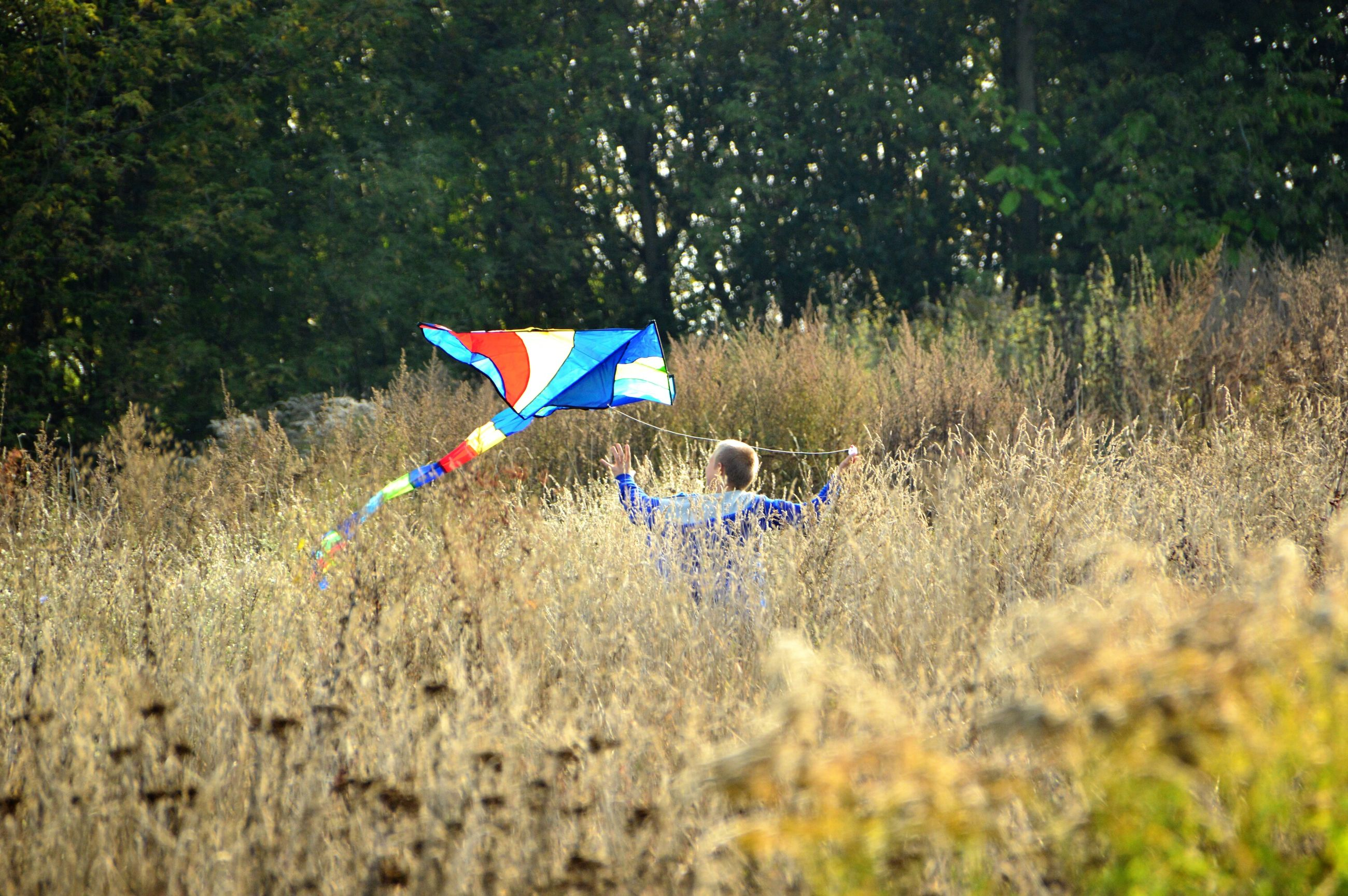 flag, patriotism, identity, national flag, american flag, multi colored, wind, field, flying, celebration, tree, day, mid-air, outdoors, grass, nature, culture, freedom, blue, striped