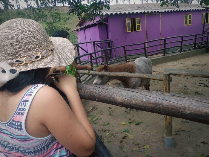 Pequeño pony. Zoo Animals Pony