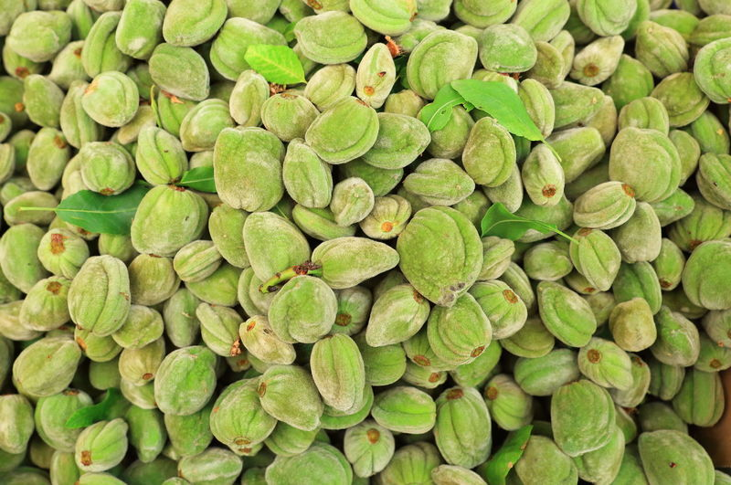 Almond Tree Nuts Abundance Almonds Almonds Background Almonds Fruits Backgrounds Close-up Food Food And Drink Freshness Full Frame Green Almonds Green Color Healthy Eating Healthy Food