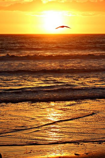 Sunset Sea Nature Beach Silhouette Orange Color Beauty In Nature Water Sun Sky Wave Yellow Outdoors Sand Horizon Over Water Romantic Sky Bird Gold Colored No People Day Nothing Gold Can Stay Beauty Zen All Is Beautiful All Is Well Live For The Story