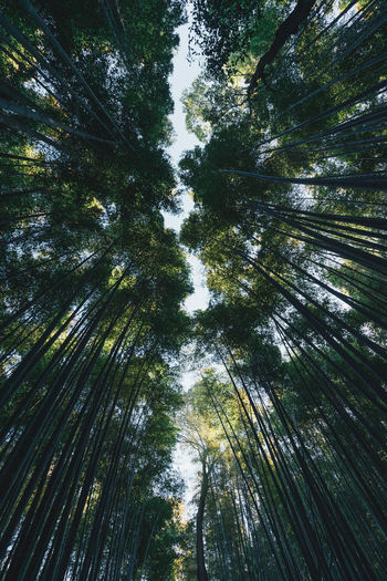 Low angle view of trees at forest