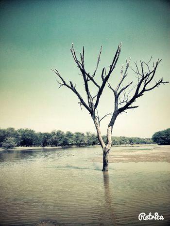 Thol Lake Wildlife Sanctuary  Peaceful