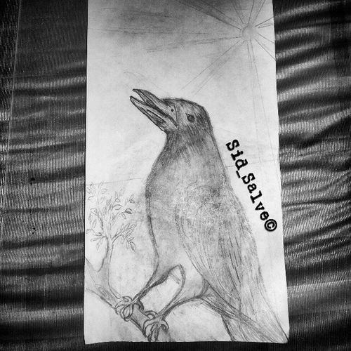 What a Beautiful Bird..!! Drawn by me...!! Artist HD Clear Pencil Graphit Lofi Yariroad Mumbai 3fouth Pagesize Blackwhite