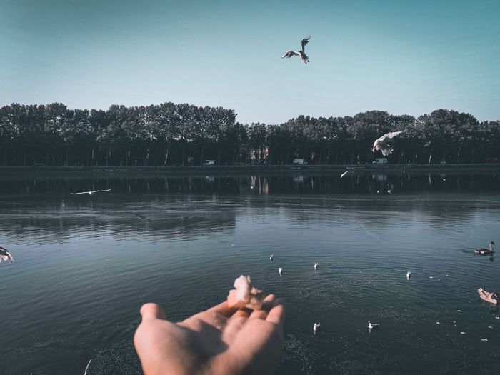 Cropped hand of person feeding birds by lake