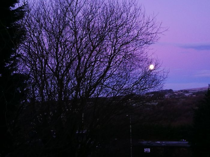 full moon morning Purple Sky Moon Fullmoon Beauty Full Moon Fun Beautiful View Moon Pictures Moon Morning Nice Sky Love Yourself Tree Purple Night Flower Beauty In Nature No People Sky Outdoors