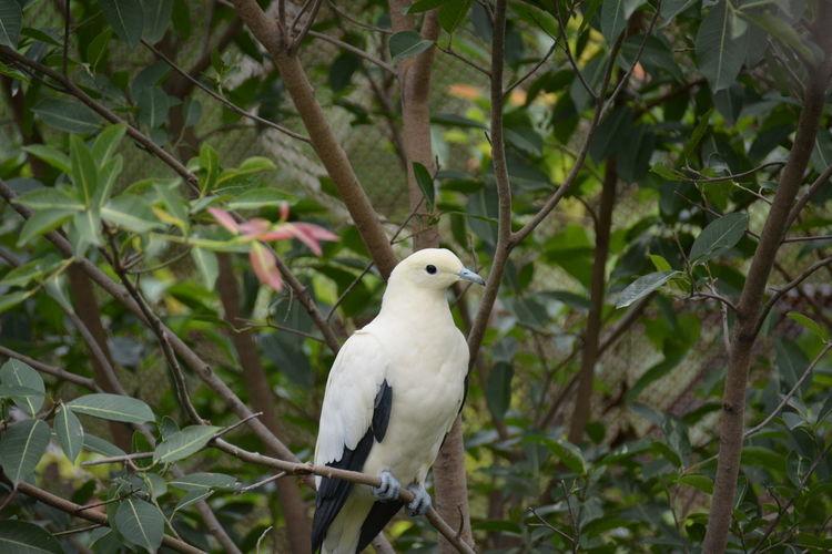 Bird Tree Owl Bird Of Prey Parrot Portrait Branch Dove - Bird