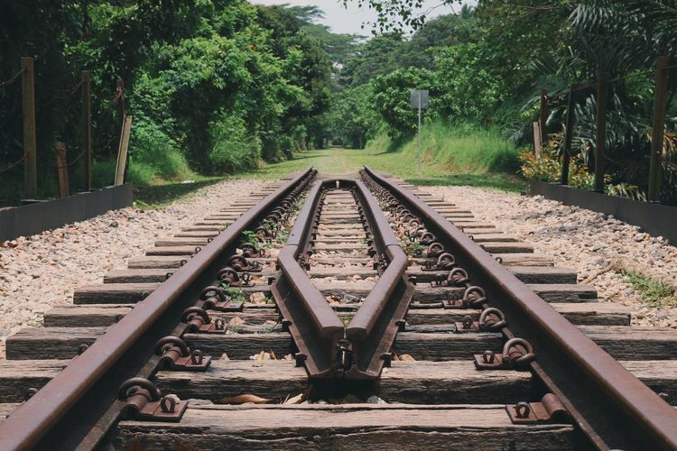 Diminishing perspective of railroad tracks amidst trees