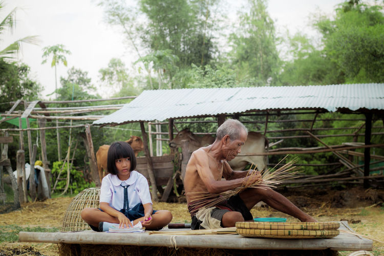 Schoolgirl studying while sitting with grandfather making wicker baskets